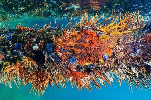 Busselton Jetty Underwater Observatory