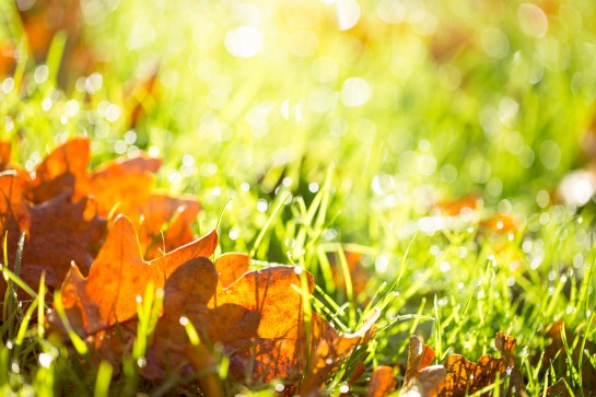 photo of colourful autumn leaves on grass with sunshine fresh natural