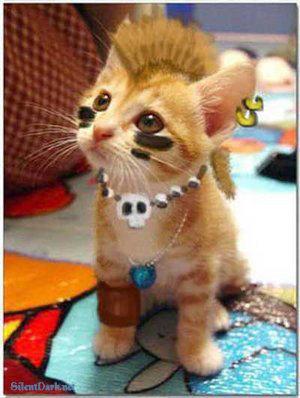 Punk_cat
