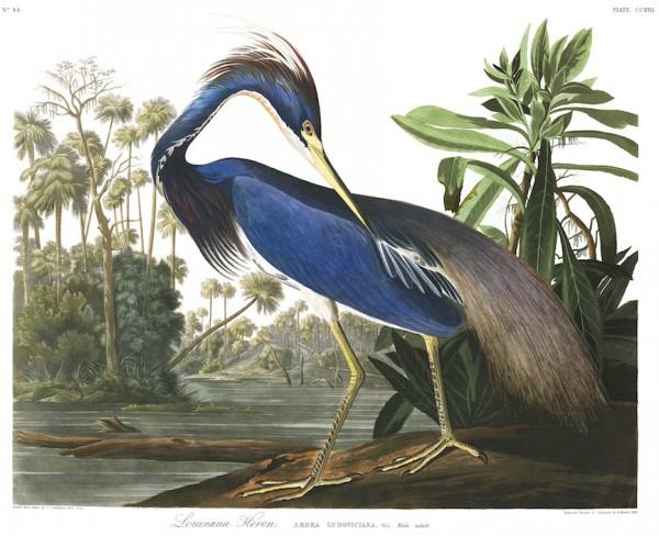 Audubon, dessins de jeunesse au Museum de La Rochelle