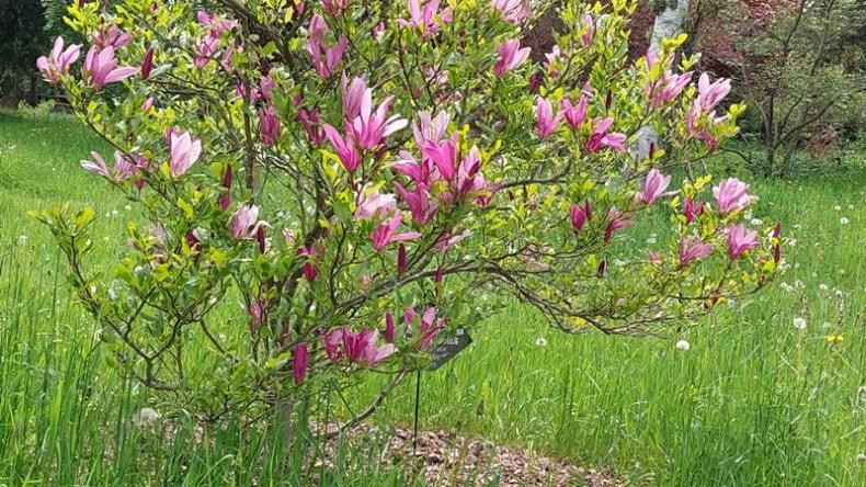 Im Arboretum oder im ASPIDA-Pflegecampus 2021-04-24