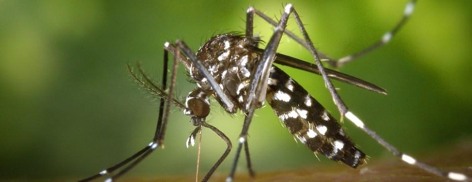 Causes and Treatment of Dengue Hemorrhagic Fever