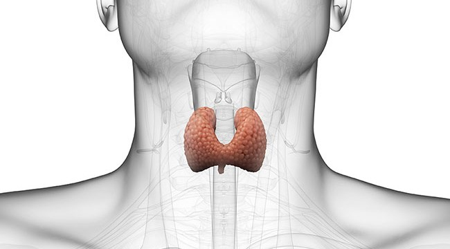 16 Important Facts You Should Know about Thyroid Gland