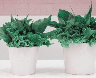 5 Health Benefits of Kitchen Gardening