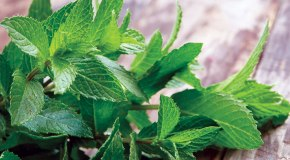 Amazing Health Benefits of Peppermint