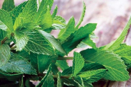 Amazing Health Benefits of Peppermint