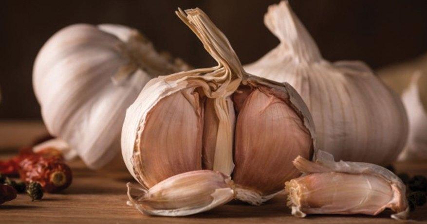 garlic for healing