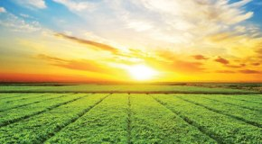 4 Health Benefits for Rural Folks