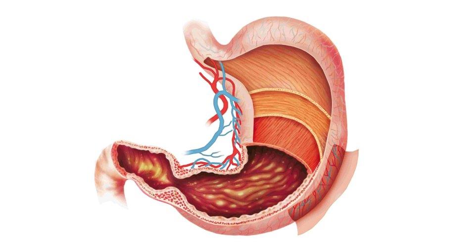 digestive role of probiotics