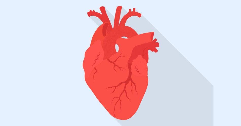 potassium for heart