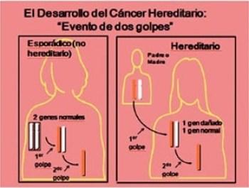 Hipotesis_de_los_dos_golpes_Maria_Iranzo_Biotec