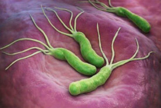 Helicobacter_Pylori_Bacteria_Cancer_Maria_Iranzo_Biotec