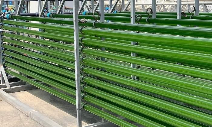 Microalgas_Biotecnologia_Maria_Iranzo_Biotec