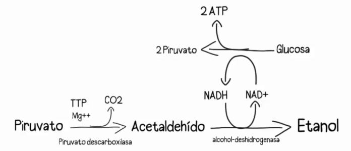 BioProductos_Pan_Biotecnologia_Maria_Iranzo_Biotec