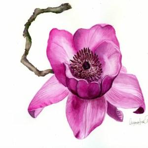 Estudio de la flor del magnolio