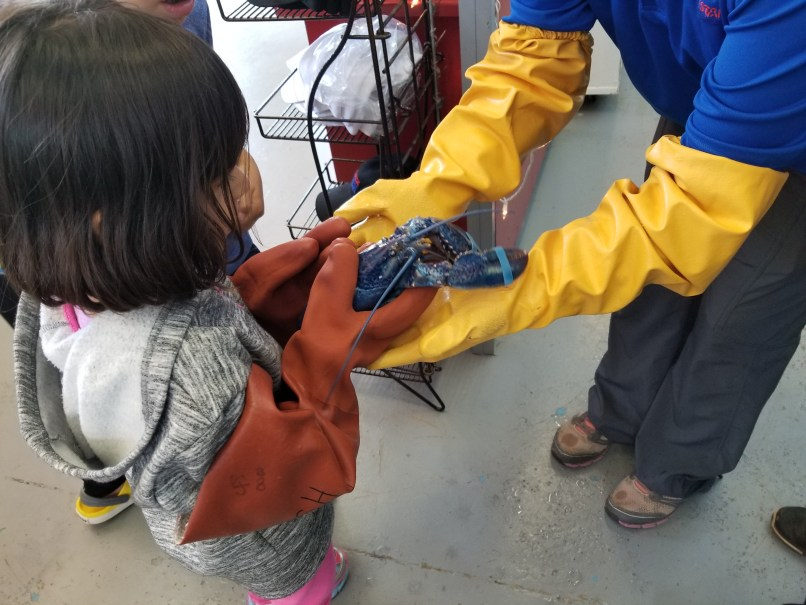 A little girl being handed a lobster at a fish market in PEI