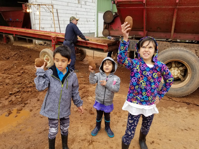 A 6-year-old boy, a 4-year-old girl, and an 8-year-old girl stand in front of a potato sorter, holding one potato each in their hands and raising it above their heads. A farmer stands in the background. Photo taken at Fulton Sanderson & Sons in Cornwall, PEI.