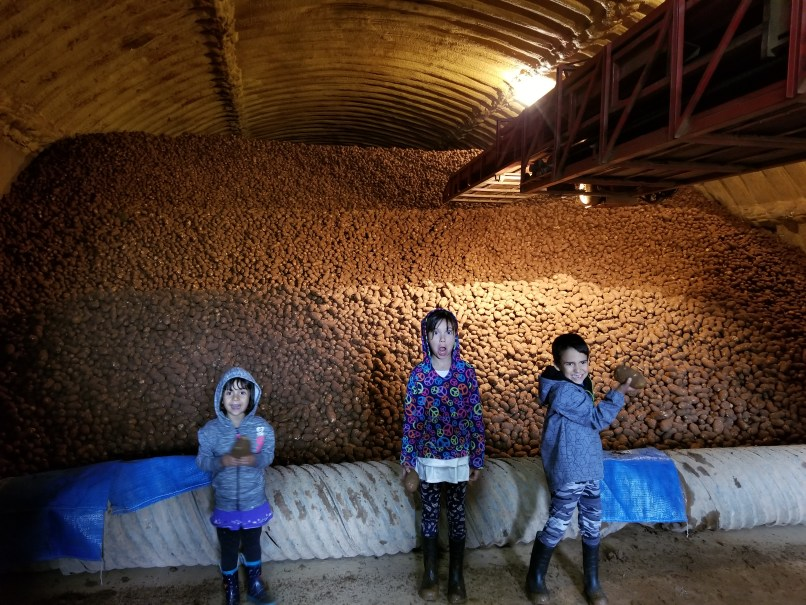 A 4-year-old girl, an 8-year-old girl, and a 6-year-old boy stand in front of 3 million pounds of potatos in a warehouse in Cornwall, PEI. They each hold a potato in their hands. The girl in the middle has her mouth wide open in an expression of complete surprise at the sheer amount of potatoes behind her.