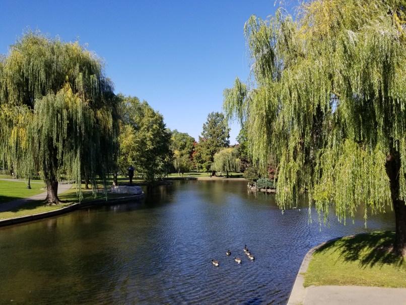 Boston Commons trees and ducks