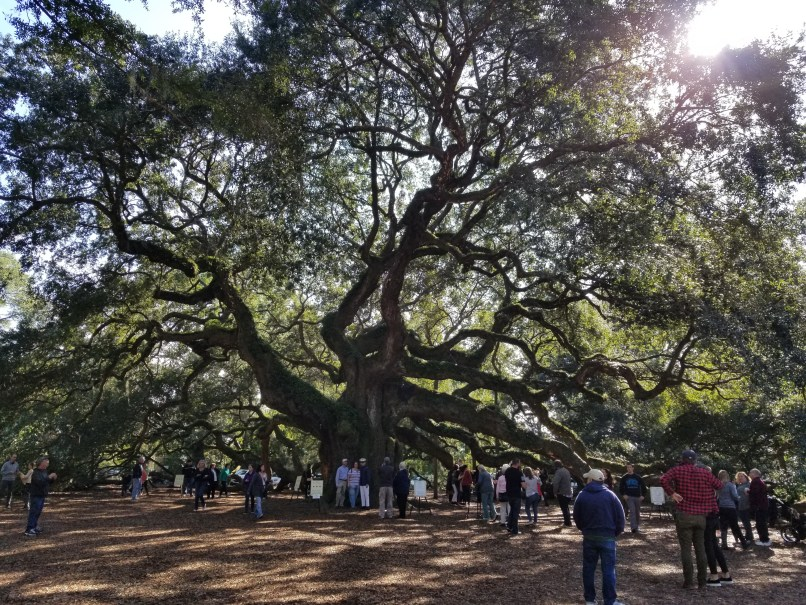 Angel Oak, St. John's Island, South Carolina