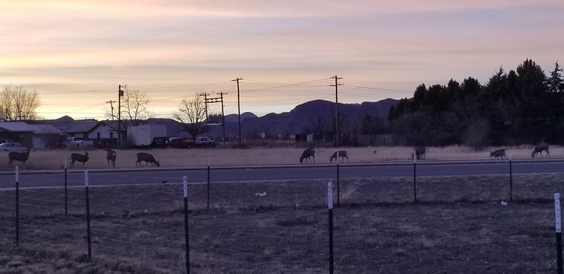 Several deer grazing on the grass in the city. Mountains can be seen in the background.