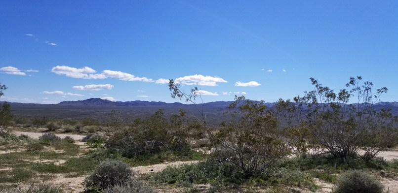mountains, trees, and clouds in a blue sky at Joshua Tree National Park BLM
