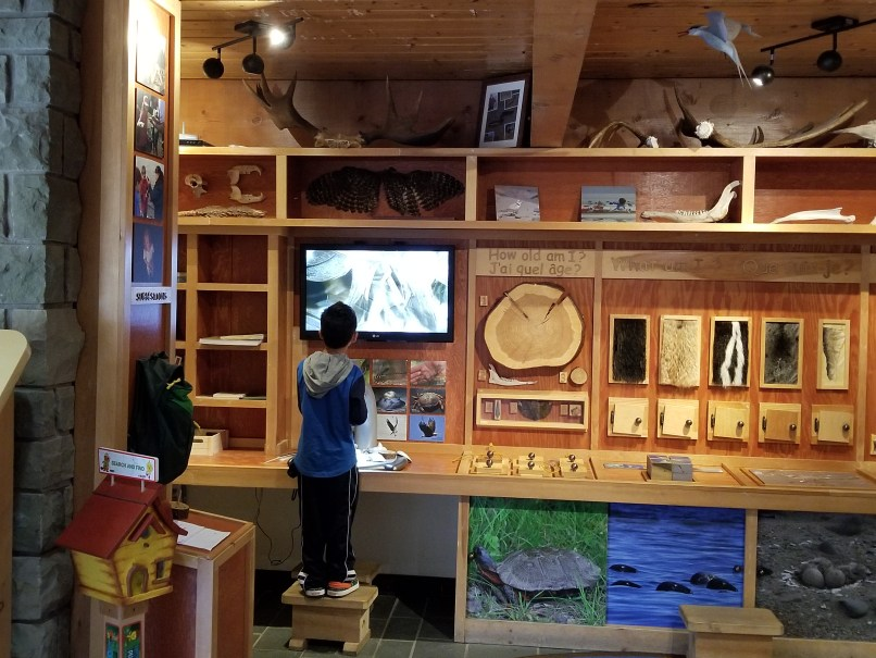 Boy looking through microscope at the Discovery Corner at Kouchibuoac National Park, New Brunswick, Canada
