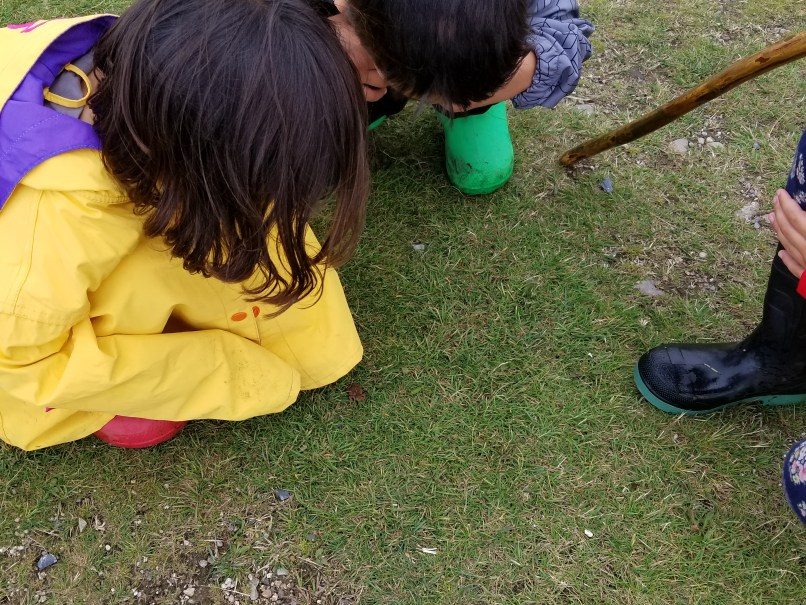 Young children crouching down to observe a very small frog on the grass. The Ultimate List of Free Homeschooling Resources on www.marianamcdougall.com. Photo by Mariana Abeid-McDougall