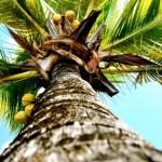 [KOSTHOLD] Kokosolje lagres ikke, den forbrennes
