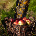 Den Norske Epledagen – 30 oppskrifter med eple