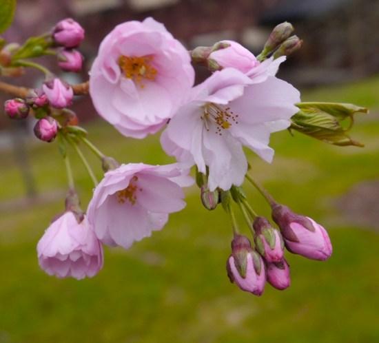 HAGETIPS--Mai-i-hagen-vanning,-gjødsling,-planting-og-stell
