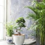 Innred med grønne planter – overalt!