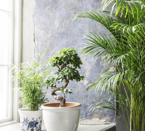 INTERIØRTIPS Grønne planter i vinduet