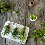 URTER: Tips og triks for å bruke opp rester av friske urter