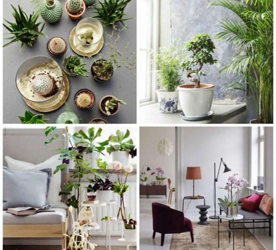 INTERIØRTIPS Grønne planter i interiøret, ikke bare trendy, men også veldig sunt