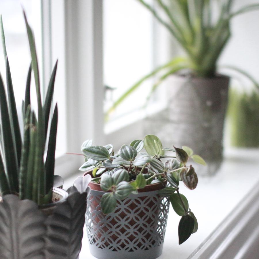 interiørtips - blomster - planter - soverommet