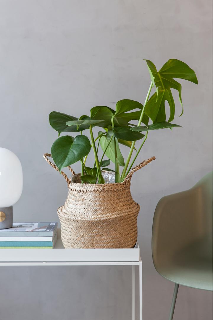 INTERIØRTIPS-Blomster-og-planter