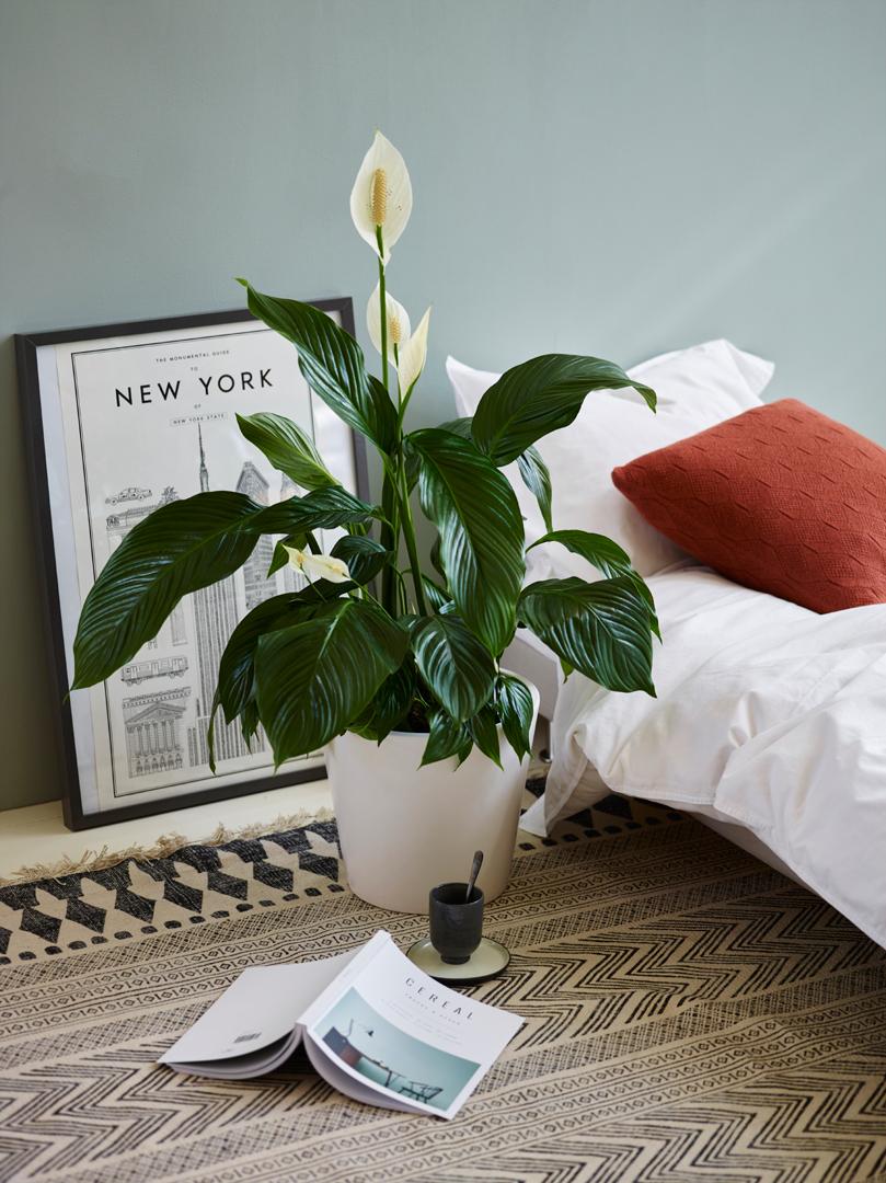 interiørtips,-DIY,-planter,-blogg,-blomster
