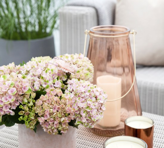 Hortensia i sart rosa
