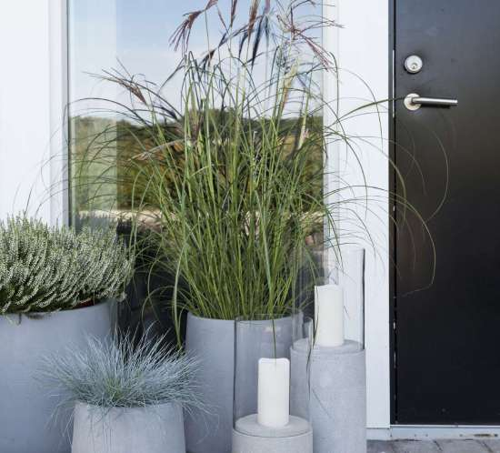 003-minimalistiske_planter_ute_tips