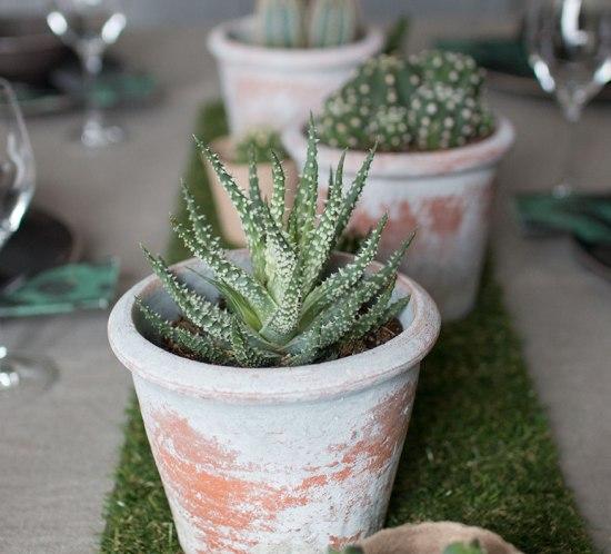 BORDDEKKINGSTIPS Bord med kaktus og sukkulenter