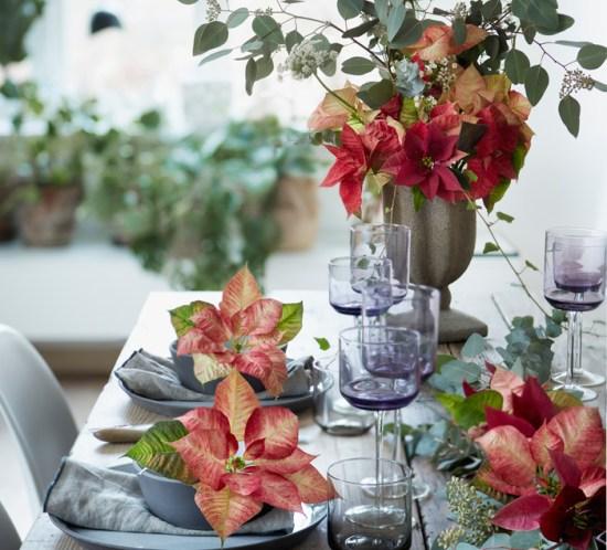 Julebord med blomsterdekorasjoner av julestjerner i lakserosa.