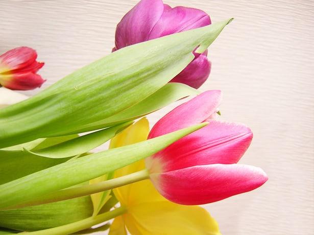 Flores para mi en una mañana triste.