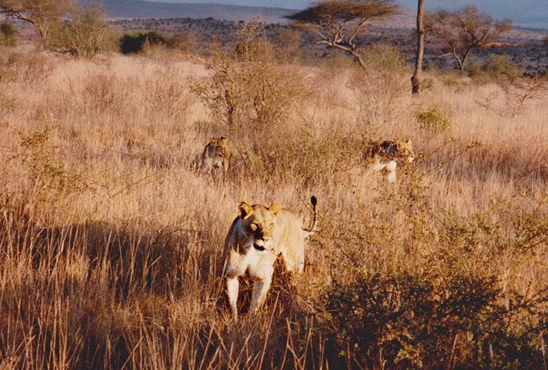 Kenya en vintage