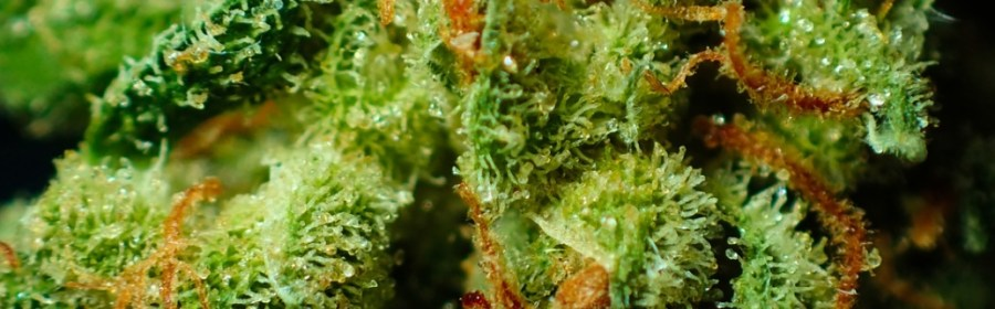 rich cannabis product