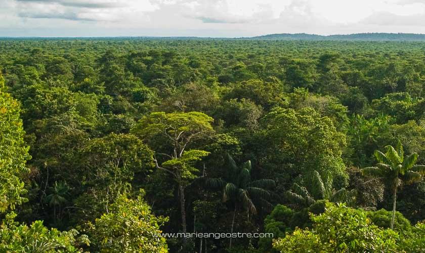 Guyane, forêt amazonienne entre Guyane et Brésil © Marie-Ange Ostré
