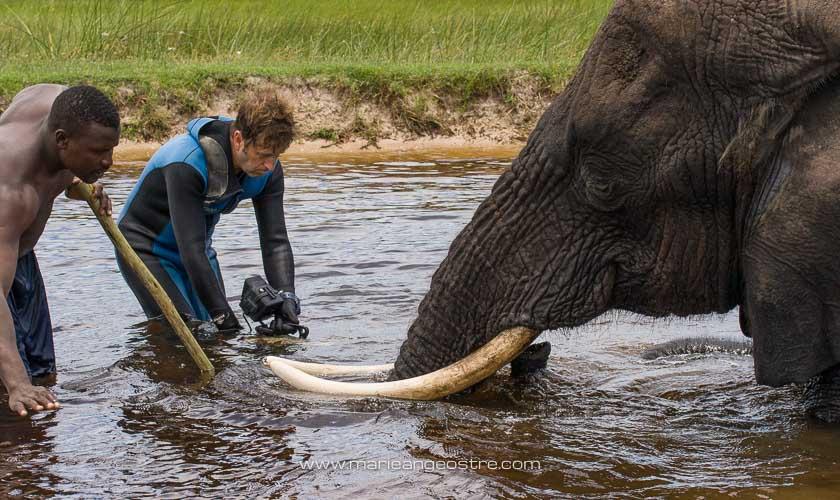 Botswana, séquence éléphants dans l'eau avec René Heuzey dans le delta de l'Okavango © Marie-Ange Ostré