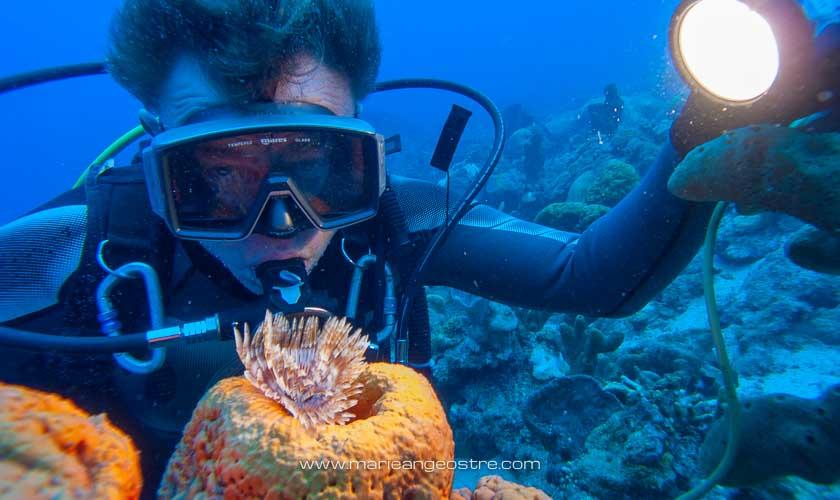 Guadeloupe, sur le site de plongée Jardin de Corail © Marie-Ange Ostré