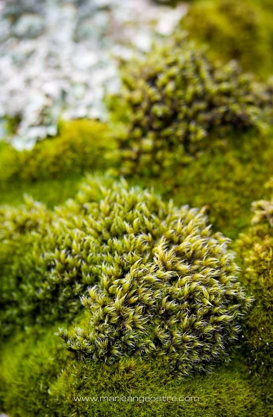 Islande, paysage et mousse © Marie-Ange Ostré
