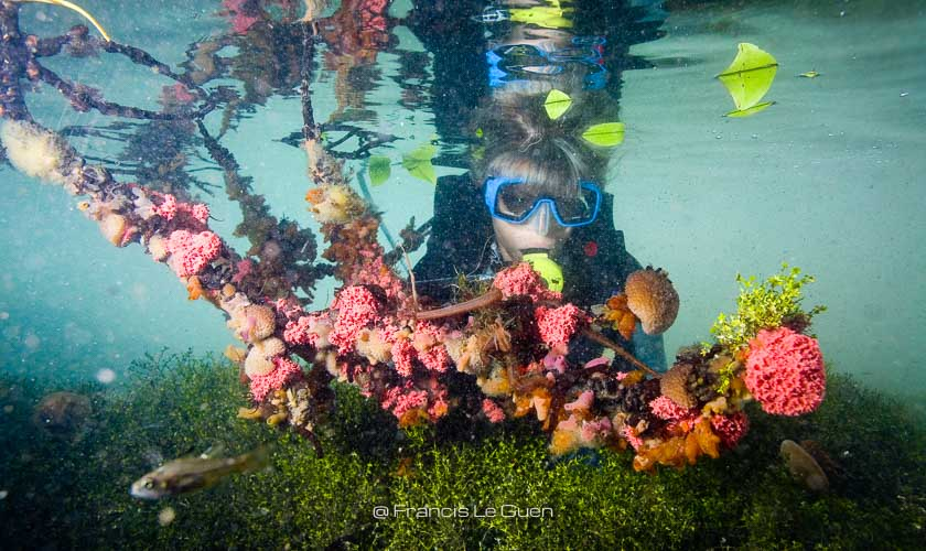 Indonésie, plongée Kakaban © Francis Le Guen